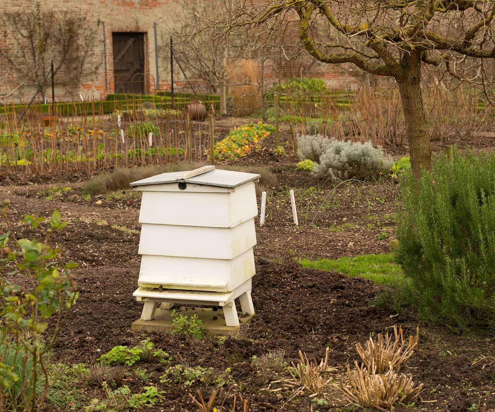 How far should I keep beehives from my house?
