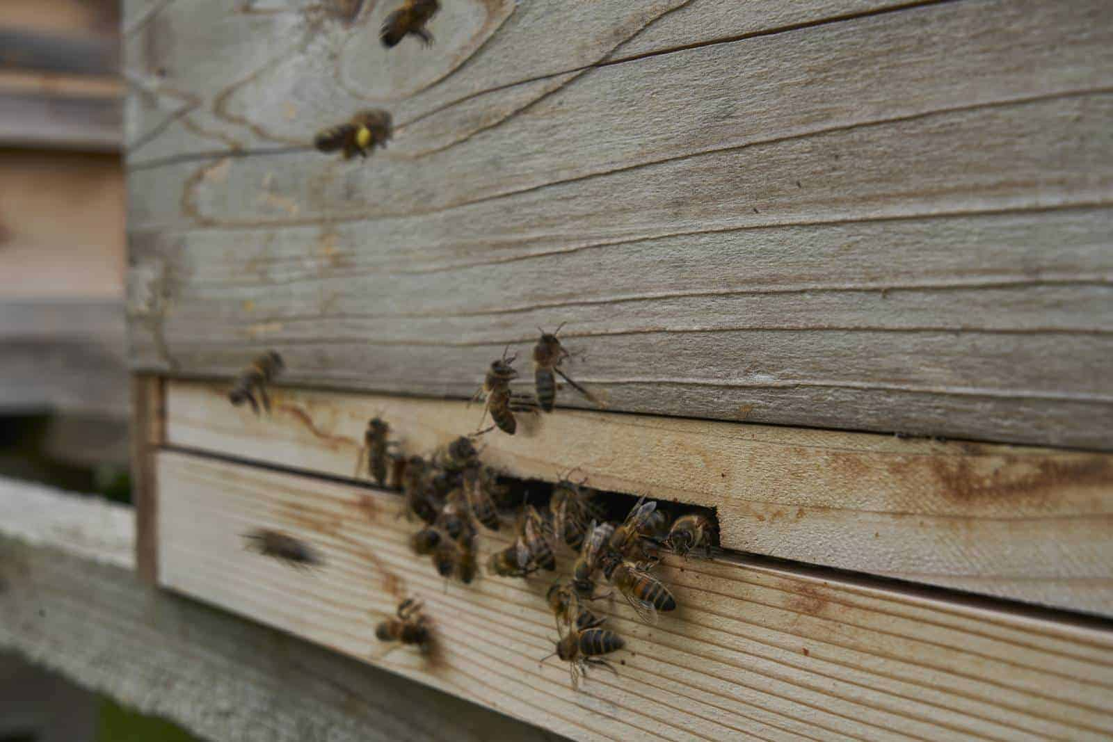 When to remove an entrance reducer from a beehive.