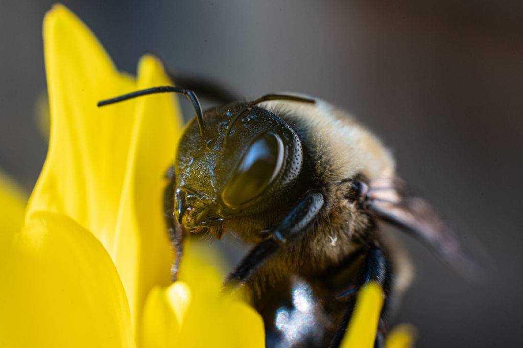 What time do bees get up for work?