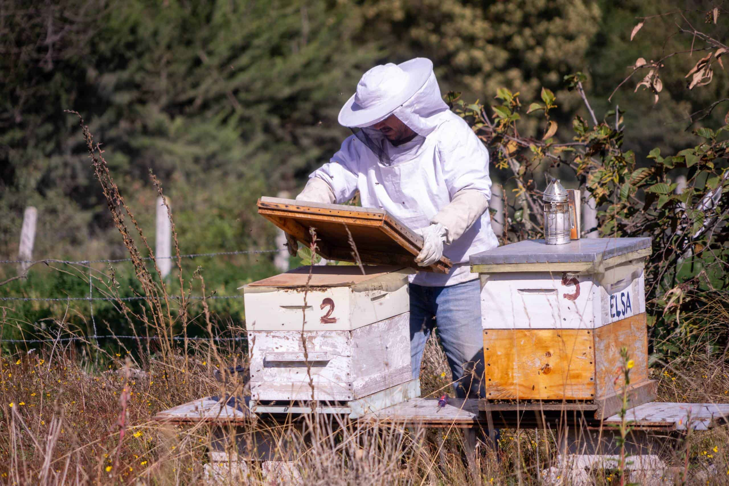 how many beehives for a new beekeeper?