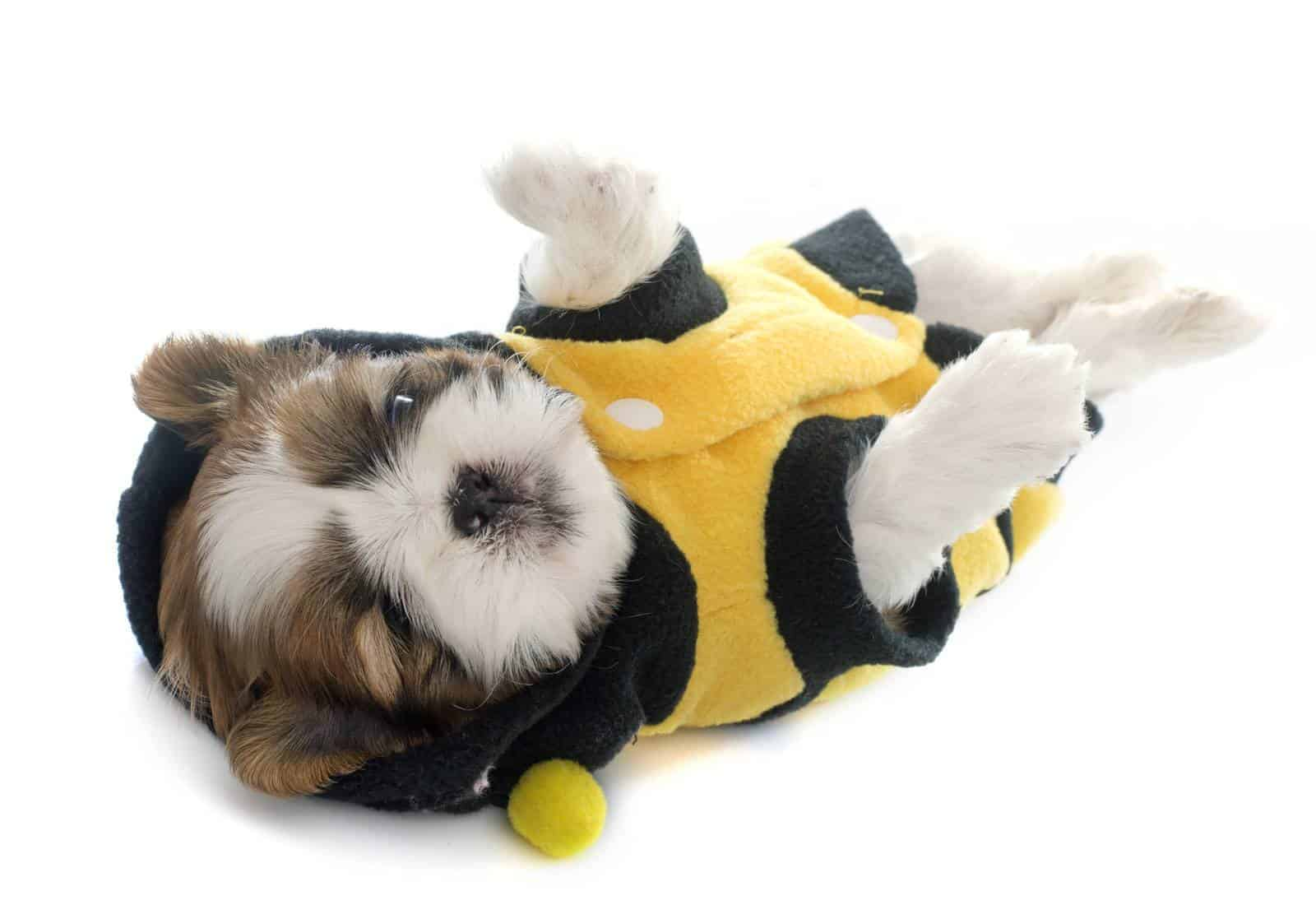 Dogs And Beeswax: What You Need To Know