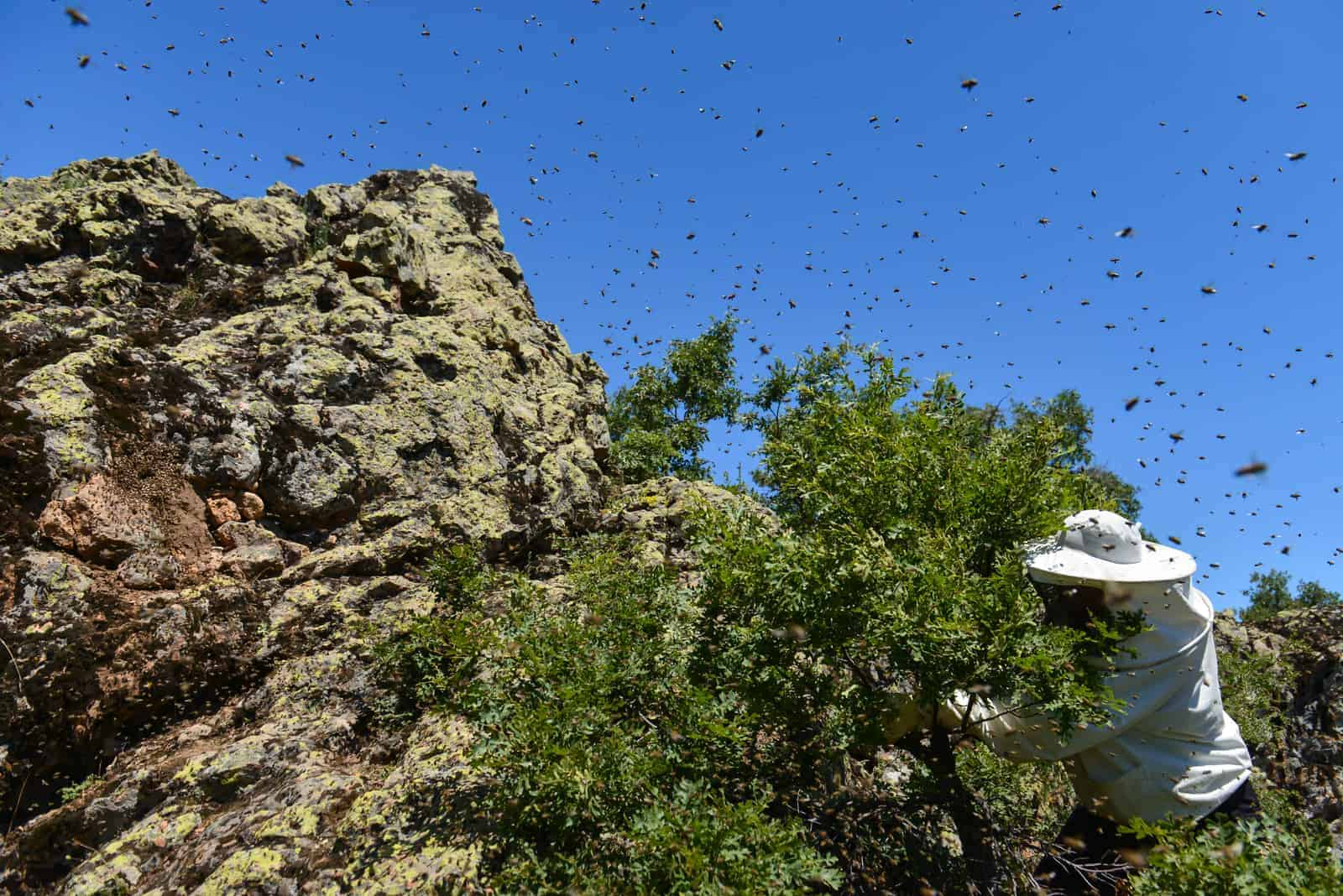 8 Reasons Why Honey Bees Can Be Aggressive