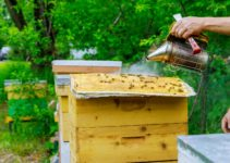 Everything You Need to Know About Why Beekeepers Use Smoke
