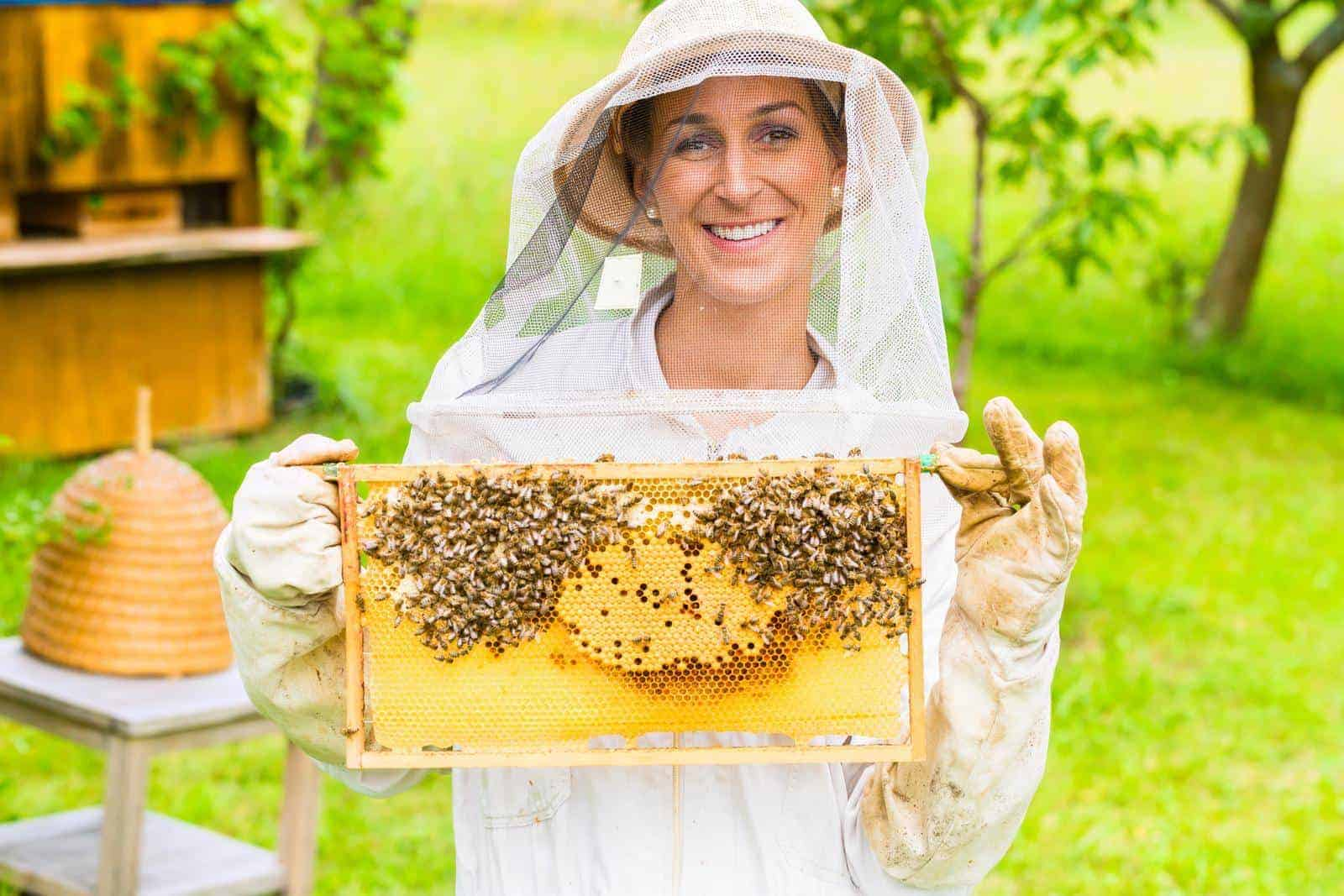 How To Become A Beekeeper: A Guide