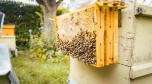 How To Reuse Beehive Frames