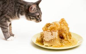 Cats and Beeswax: What You Need To Know