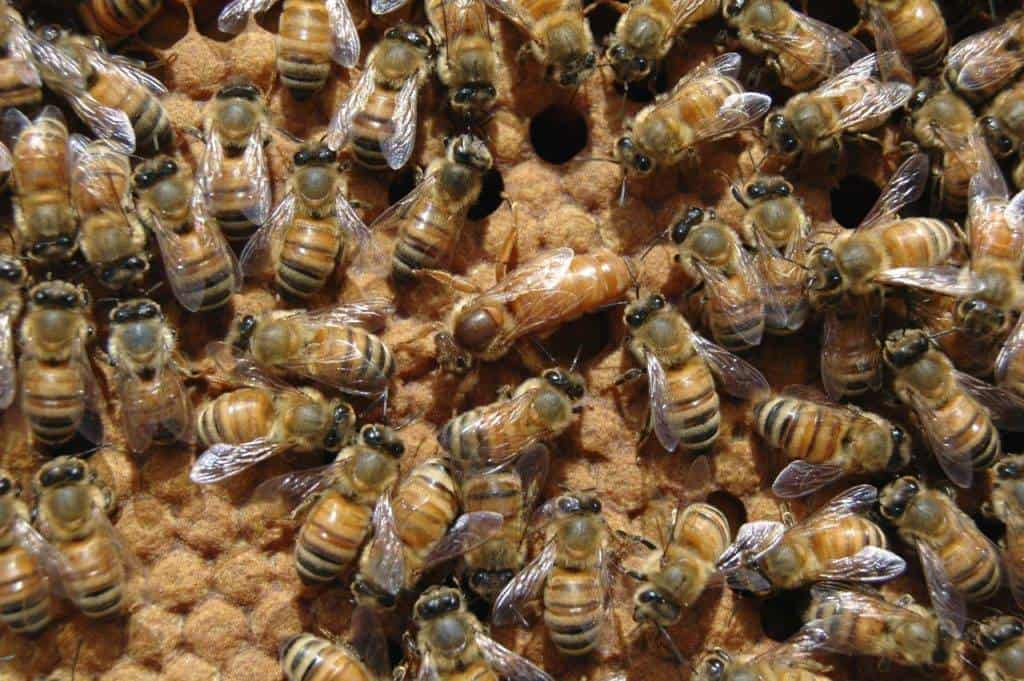 Everything You Need To Know About The Queen Bee