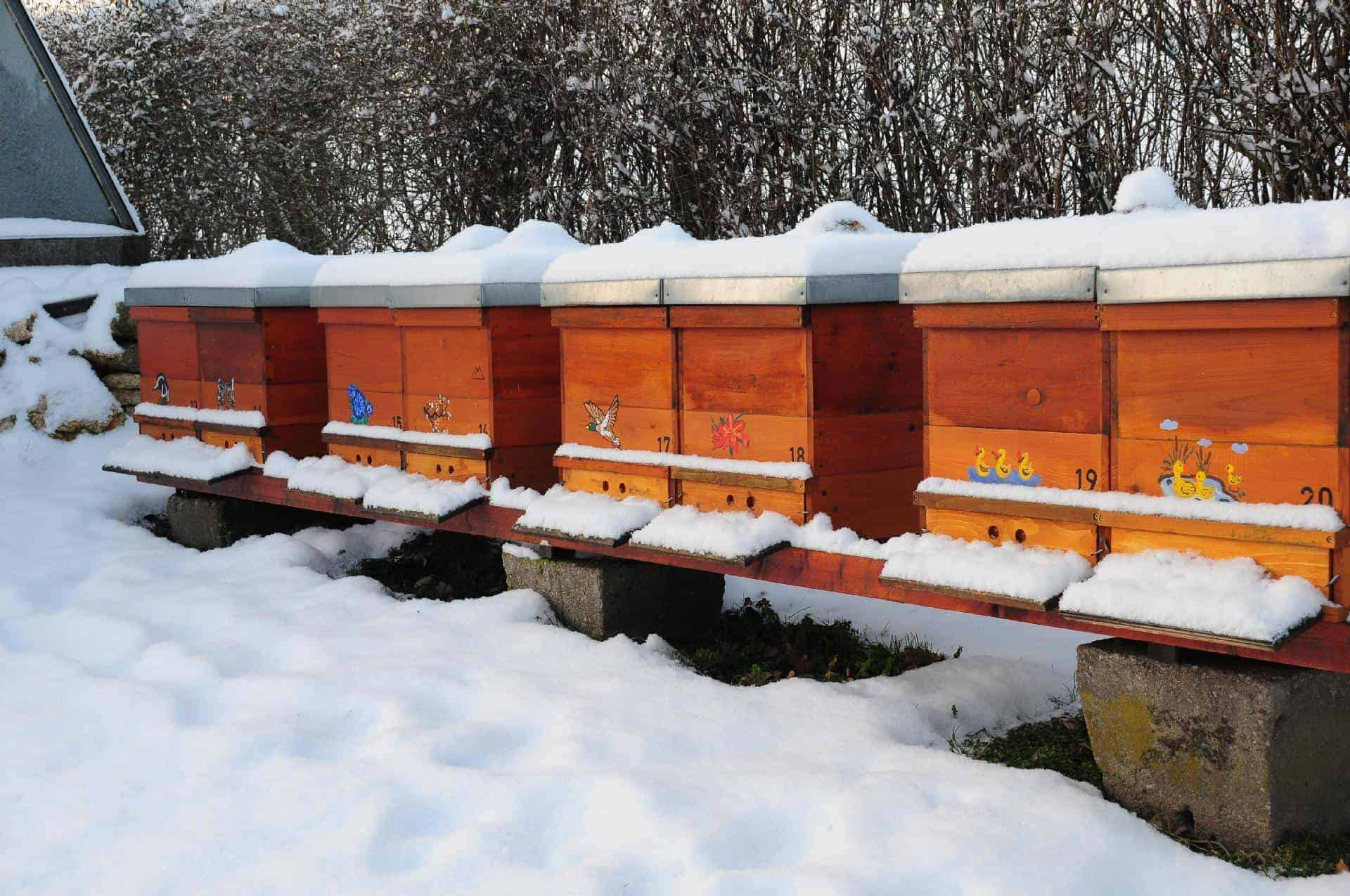 A Guide To Keeping Bees In The Winter
