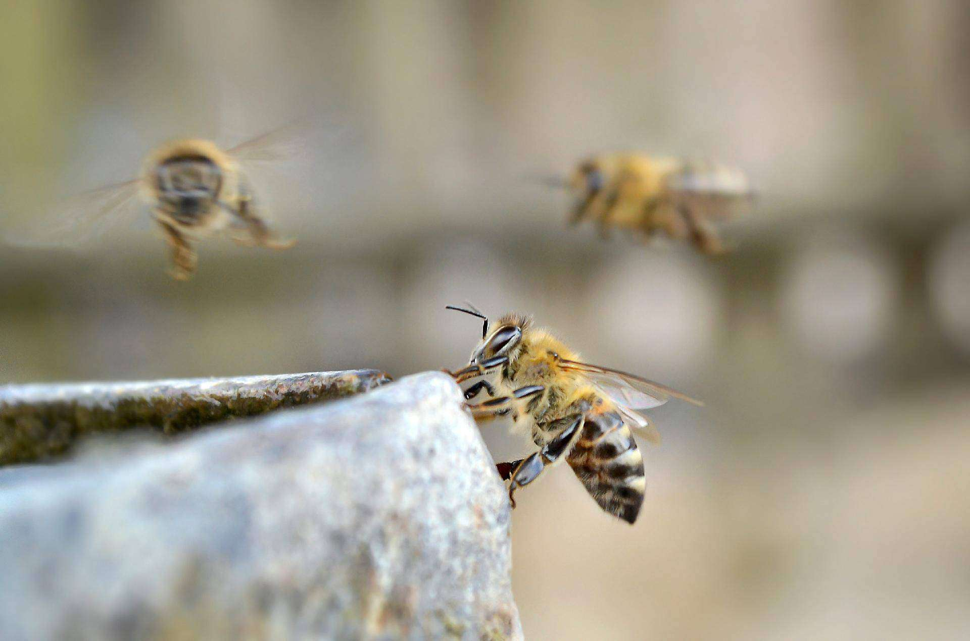 top 5 reasons why bees are important.