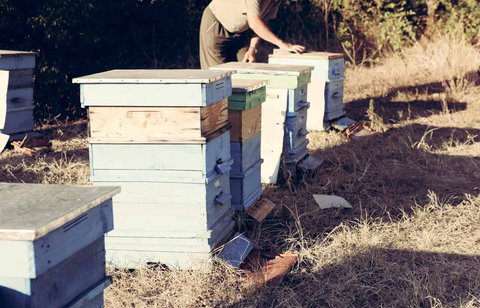 A Guide to Moving Bees Without Killing Them