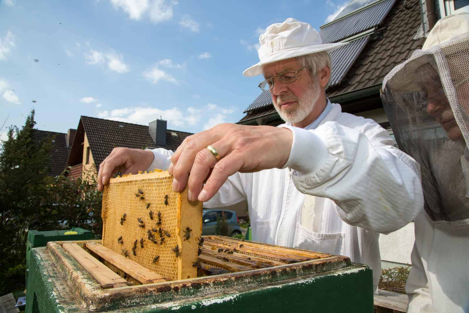 Beekeeping Suit or Jacket: Which is Better?