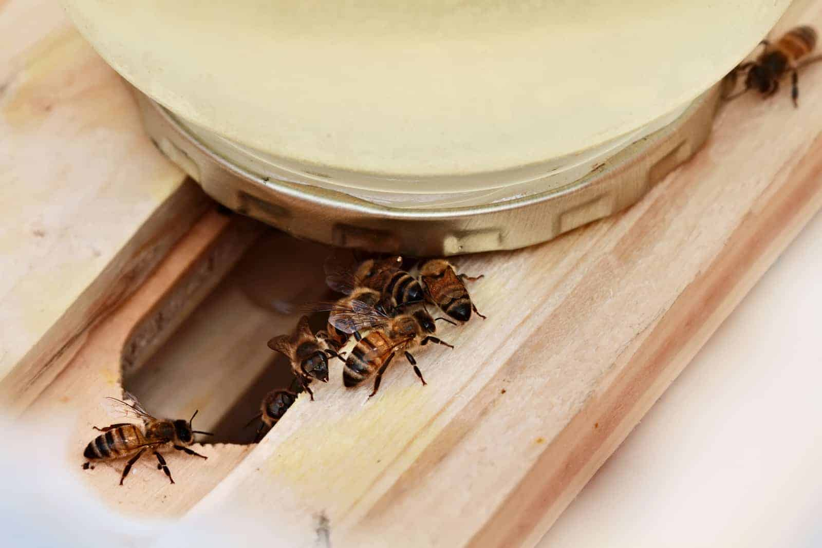 Can you overfeed bees?