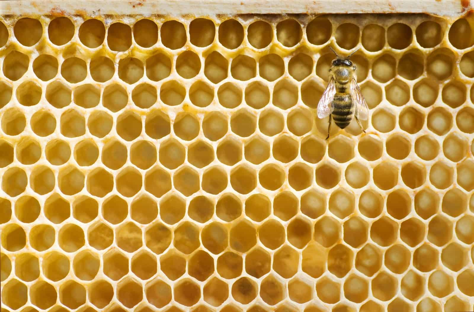 Can you start a hive with only the queen?