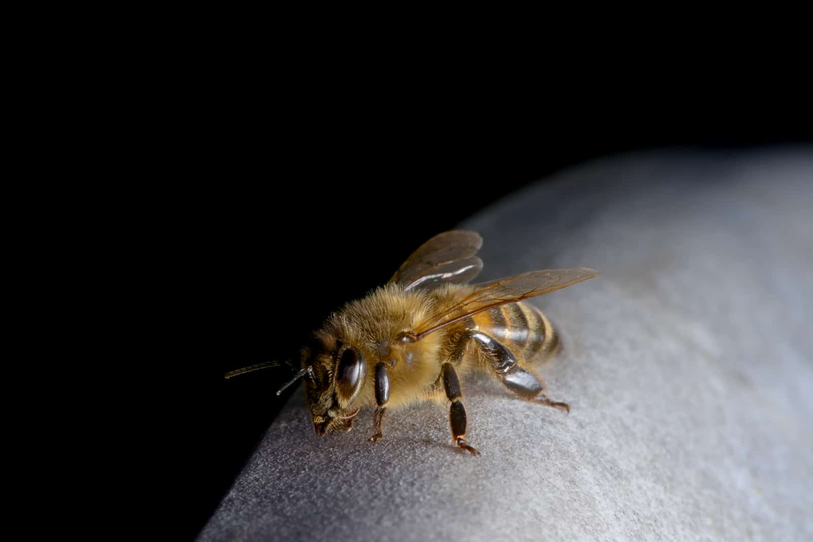 A Quick Guide to Reviving an Exhausted Bee