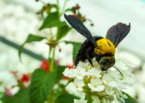 Bees Aren't Just Black and Yellow [SURPRISINGLY]