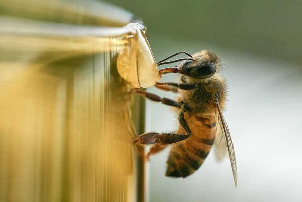 how much does a bee weigh