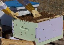 Should You Buy Packaged Bees or Nucs? [COLD HARD FACTS!]