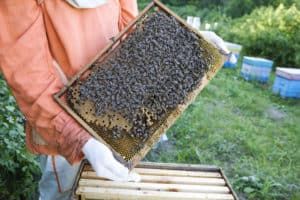 Can I Get Grants To Keep Bees?