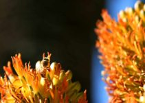 Can Bees See at Night? [BEE FACTS]
