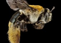 Are Bees Born Fully Grown? [BEE FACTS]
